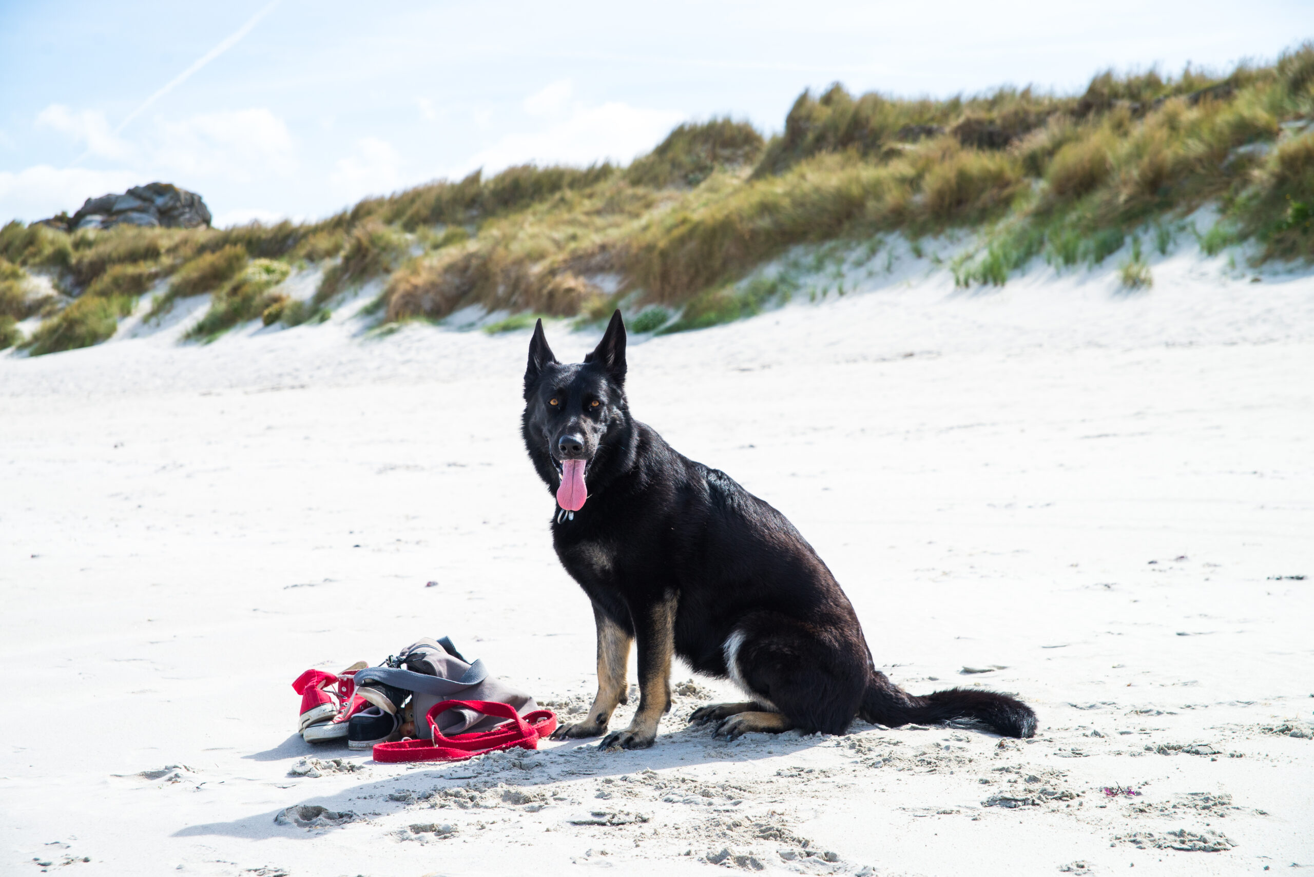 Frieda am Strand sitzend