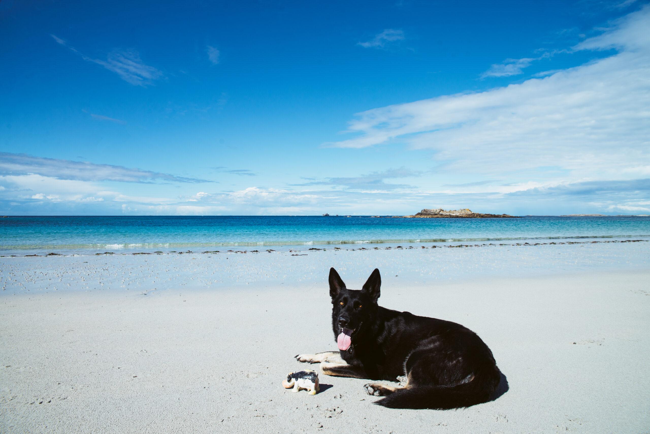 Schäferhund liegt am Strand