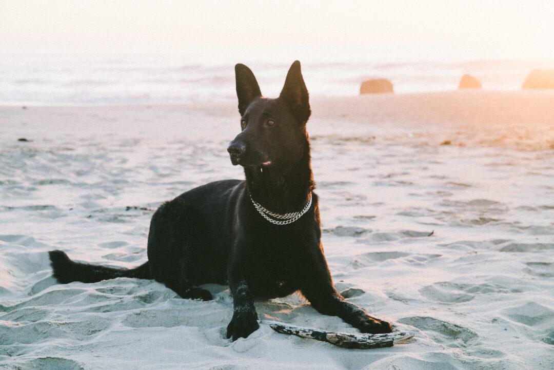 Ryok am Meer mit Sonne
