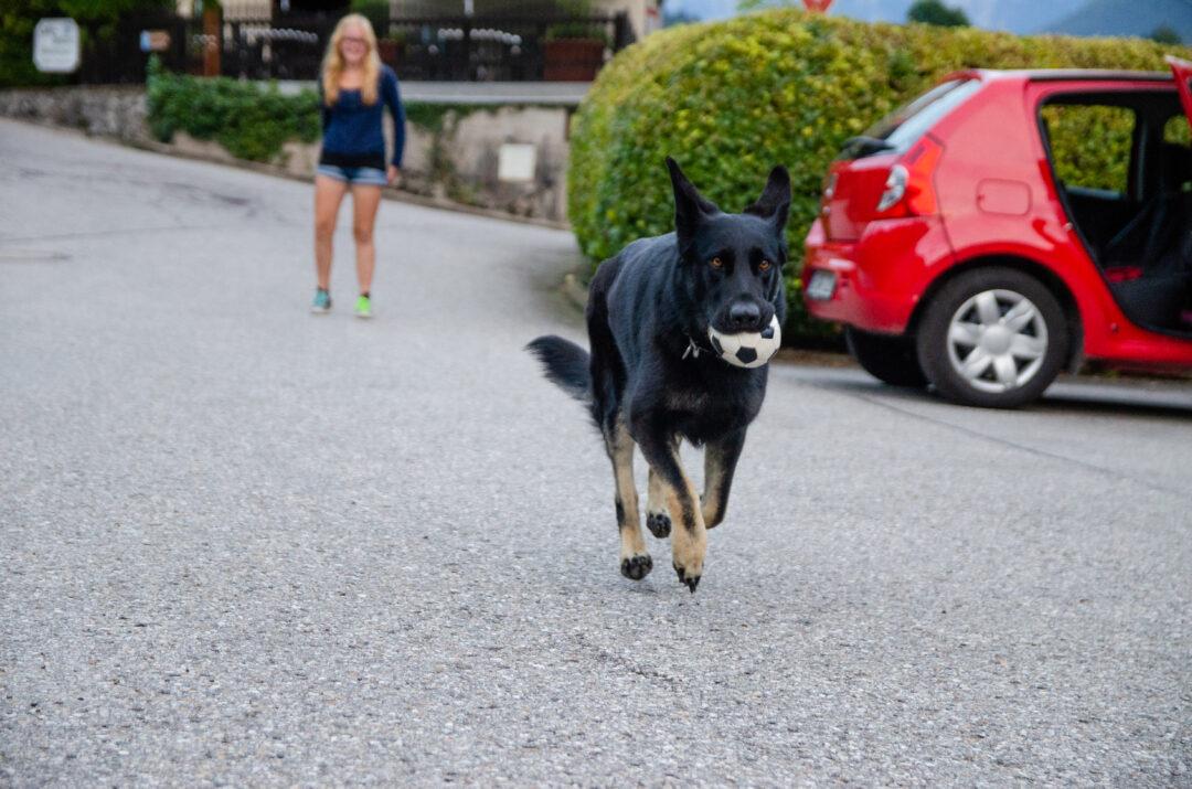 Frieda rennt mit Ball